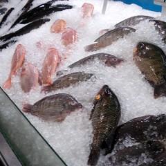 Fish Fridays During Lent