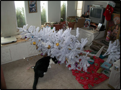 Christmas Tales, Father Larry's Cat